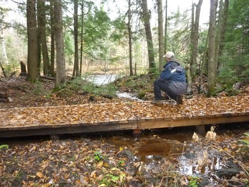 Une idées des sentiers du secteur de La forêt ancienne