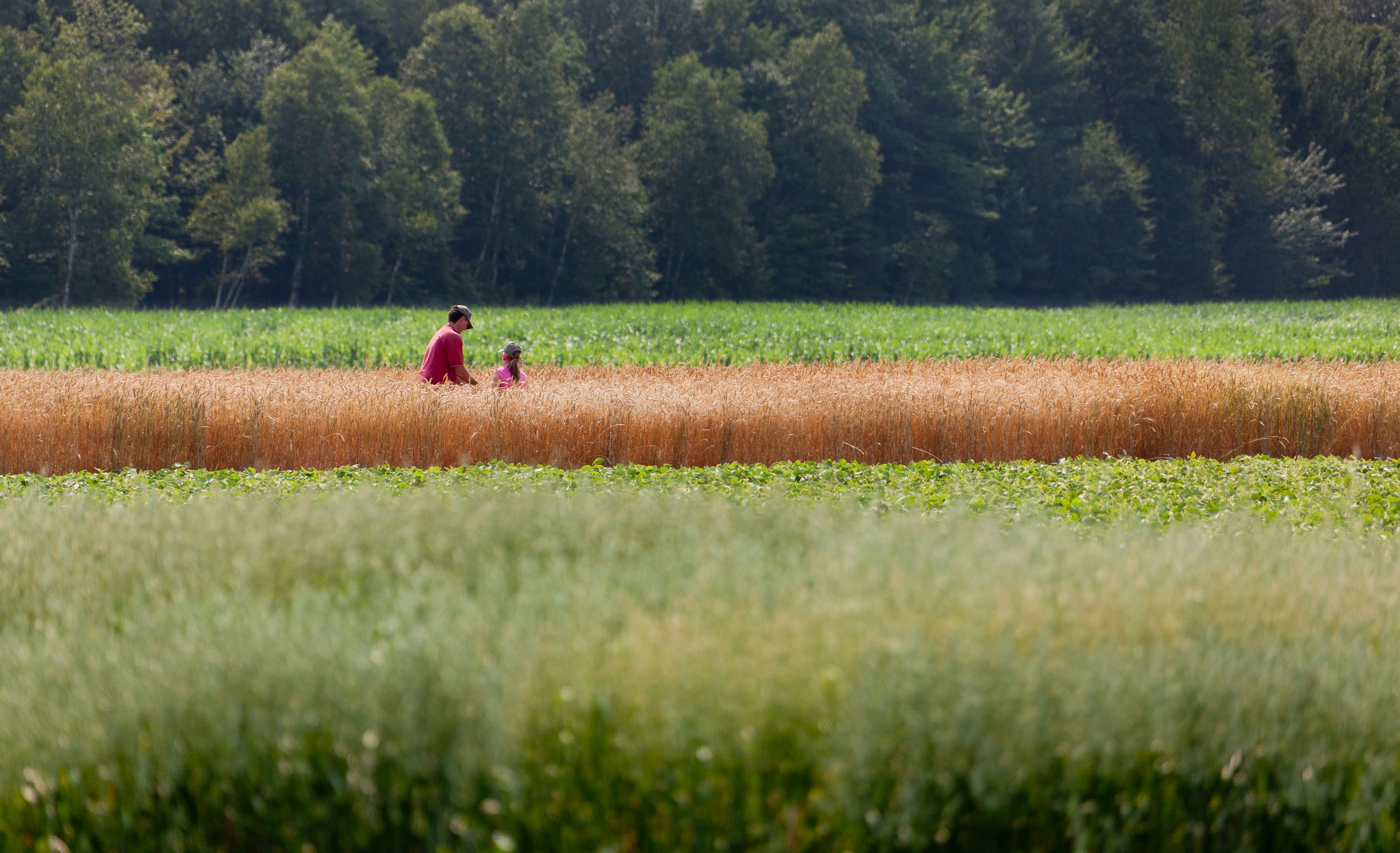 Nouvelles aides financières expliquées aux agriculteurs