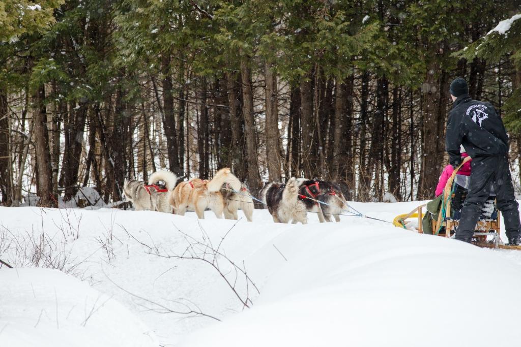 Traîneau à chiens dans la MRC de L'Érable