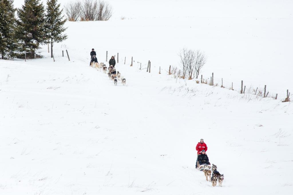 Traîneau à chiens MRC de L'Érable