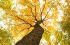 Arbre feuilles jaunes et vertes